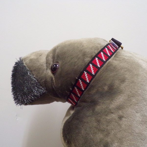 Dog Collar on Manatee